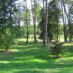 Tatrzańskie Park Narodowy – zwierzęta oraz rośliny