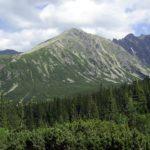Piętro roślinności w Tatrach w którym występują drzewa